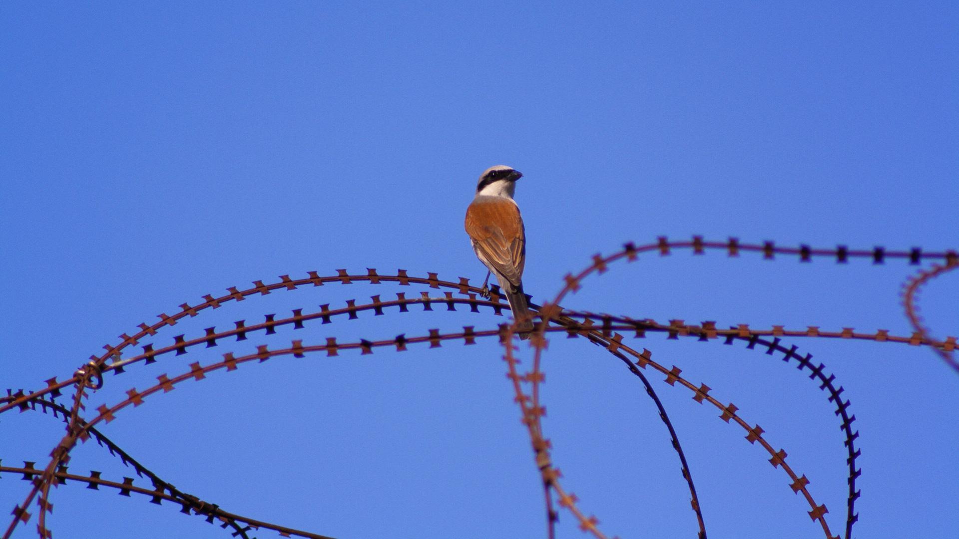 Kommt ein Vogel geflogen…