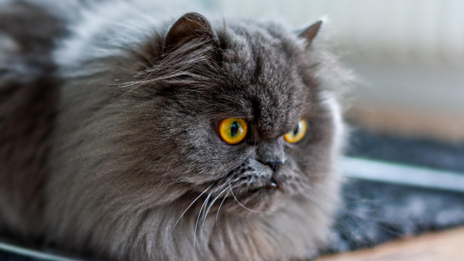 Murmel beobachtet